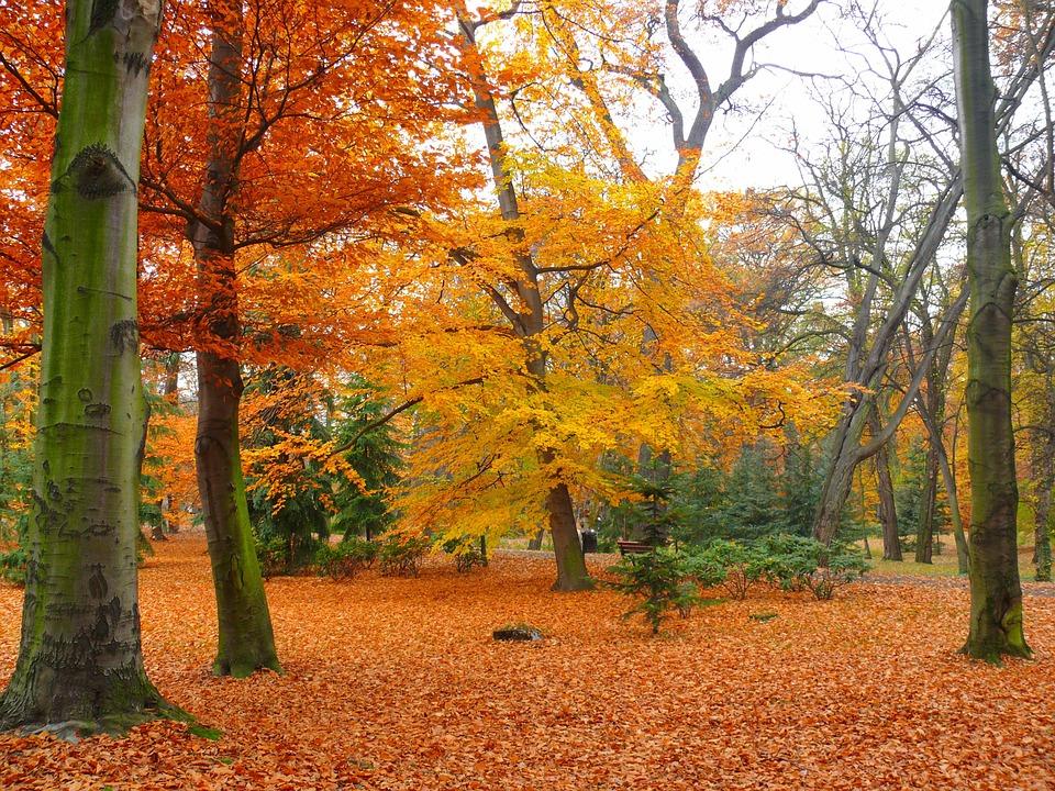 Colores de otoño para el jardín